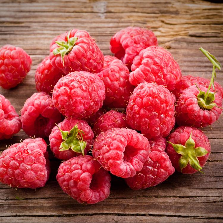 """Rubus idaeus """"Mormors Hallon"""""""
