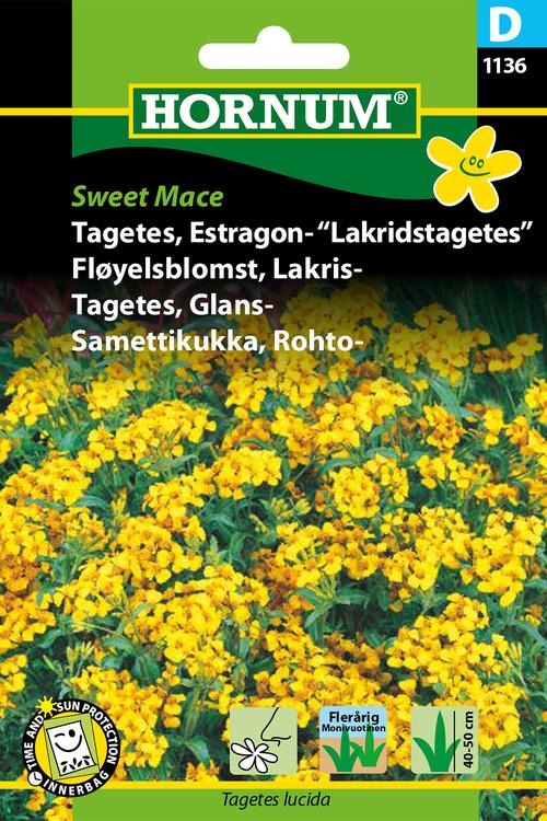 "Lakrits Tagetes ""Sweet Mace"""