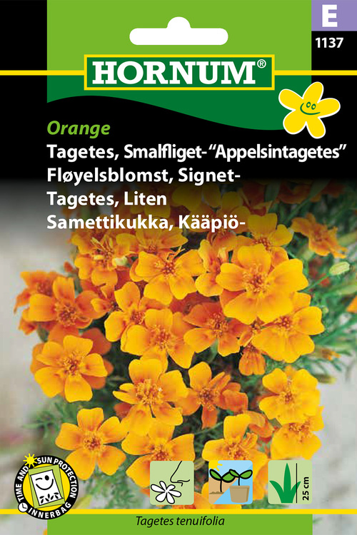 "Apelsin Tagetes ""Orange"""