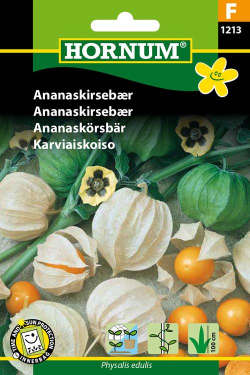 Physalis - Ananaskörsbär