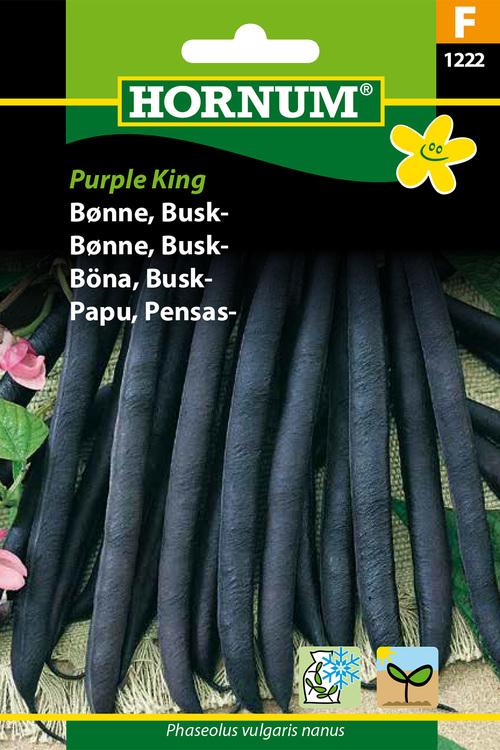 "Buskböna ""Purple King"""