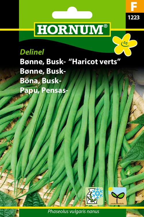 "Buskböna - Harico Verts ""Delinel"""