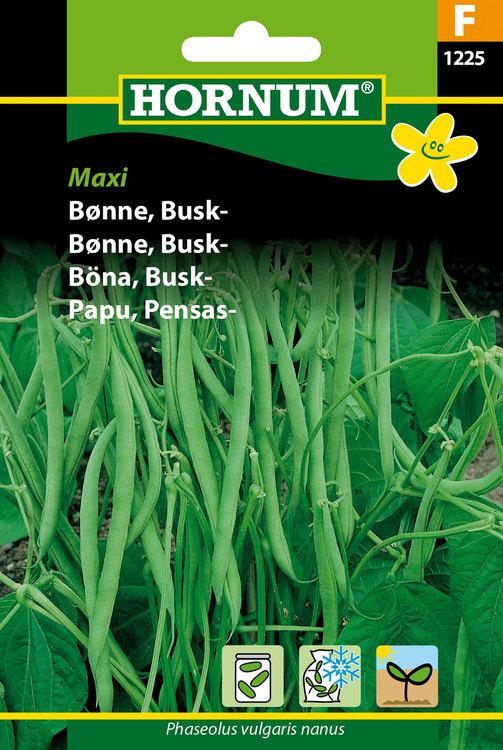 """Buskböna """"Maxi"""""""