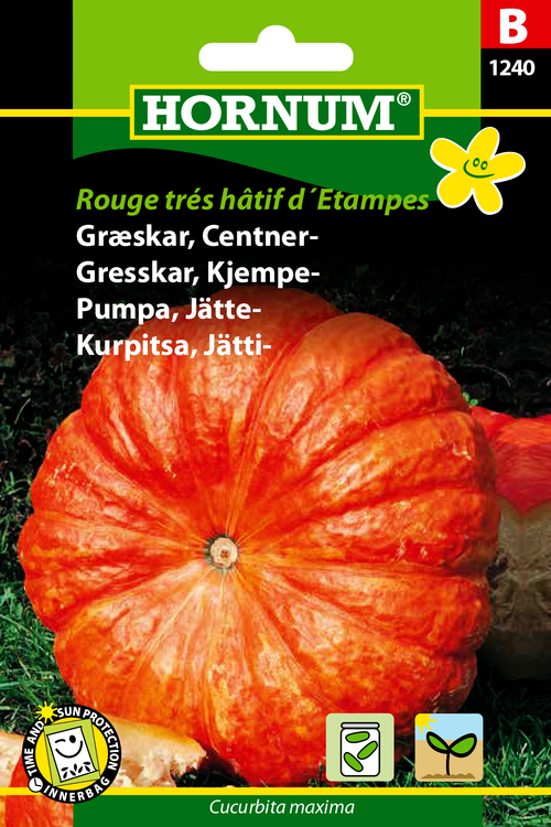 """Jättepumpa """"Rouge trés hâtif d'Etampes"""""""