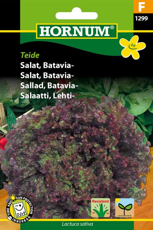 """Batavia Sallad """"Teide"""""""
