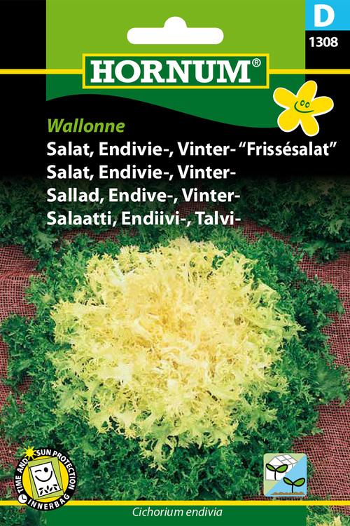 "Vinter Endivesallad ""Wallonne"""