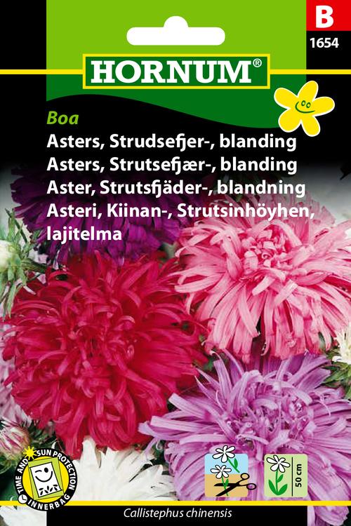 """Strutsfjäder Aster """"Boa"""""""