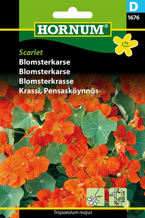 """Blomsterkrasse """"Scarlet"""""""