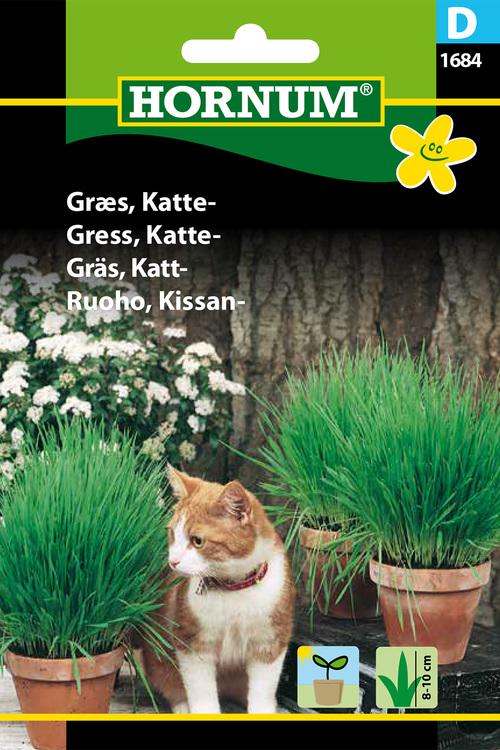 Kattgräss