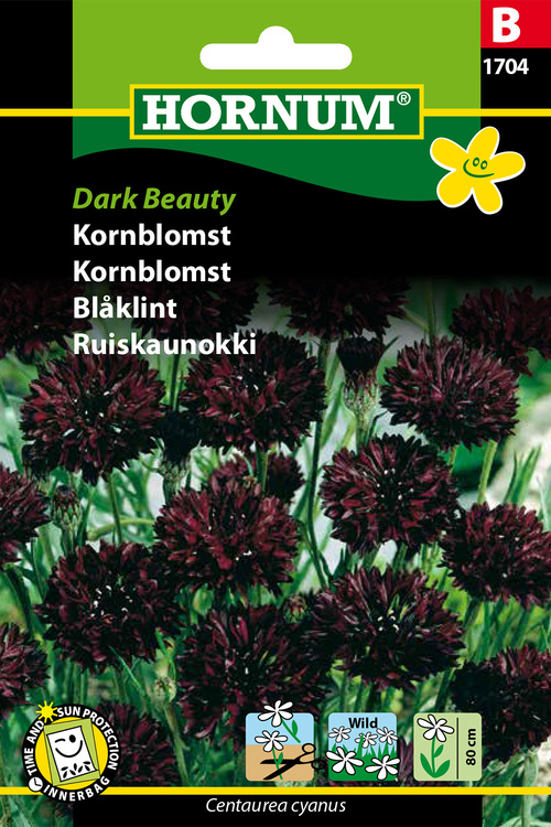 "Blåklint ""Dark Beauty"""