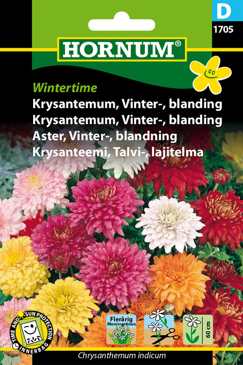 "Krysantemum, Mix ""Wintertime"""