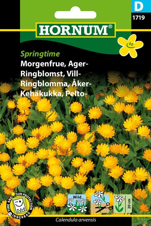 "Åkeringblomma ""Springtime"""