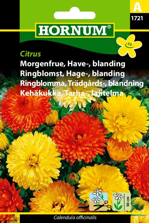 """Trädgårdsringblomma, mix """"Citrus"""""""