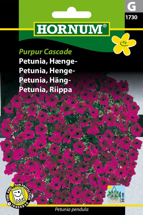 """Hängpetunia """"Purpur Cascade"""""""