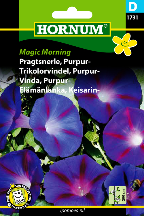"Purpurvinda ""Magic Morning"""