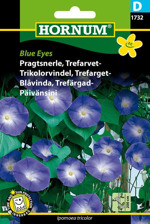 """Trefärgad Blåvinda """"Blue Eyes"""""""