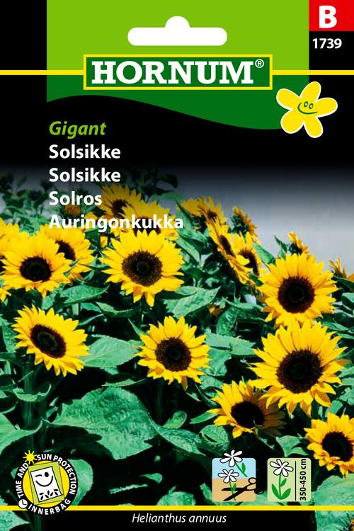"Solros ""Giant"""