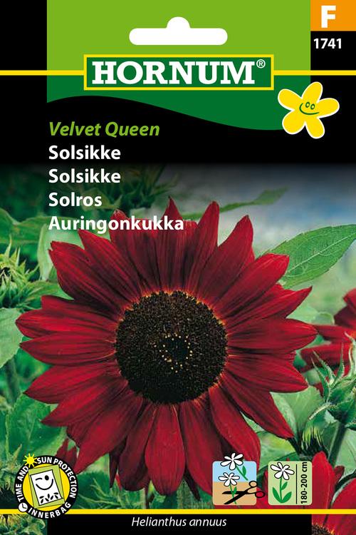 """Solros """"Velvet Queen"""""""
