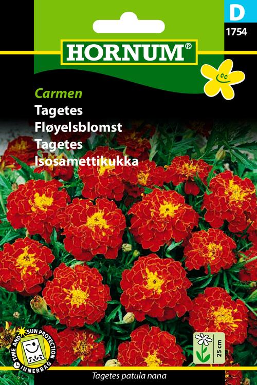 """Tagetes """"Carmen"""""""