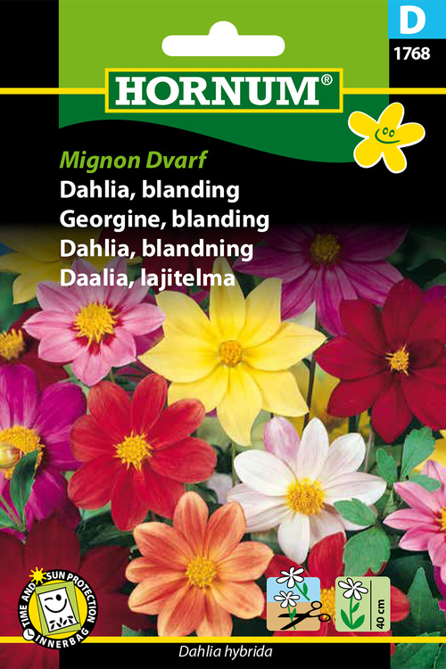"""Dahlia, mix """"Mignon Dwarf"""""""