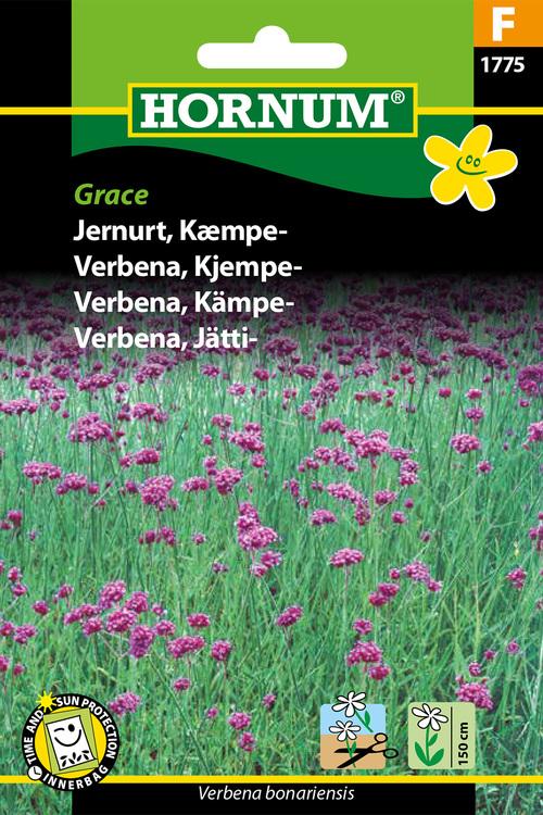 "Jätte Verbena ""Grace"""