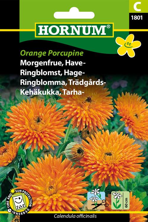 """Trädgårds Ringblomma """"Orange Porcupine"""""""