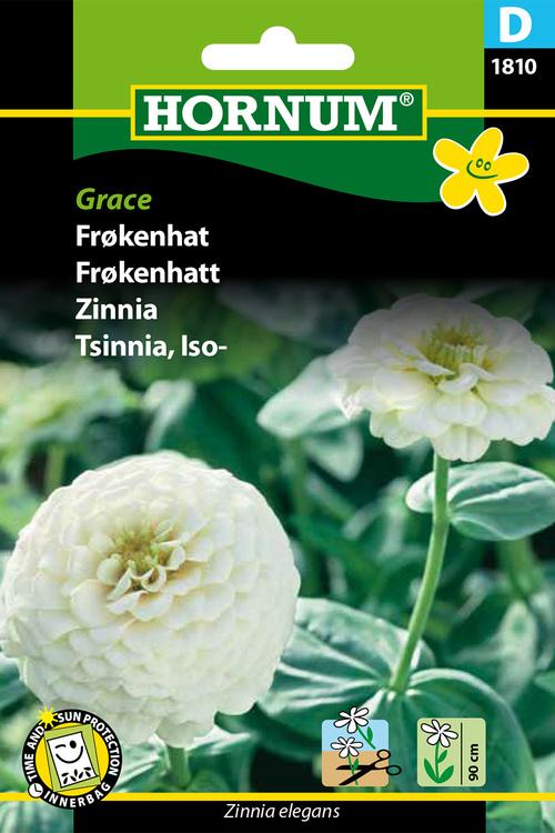 """Zinnia """"Grace"""""""