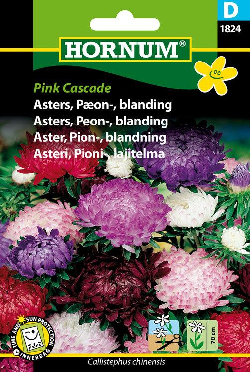 "Pion Aster ""Pink Cascade"""