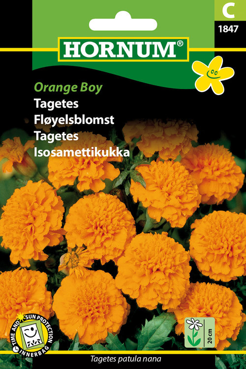 "Tagetes ""Orange Boy"""