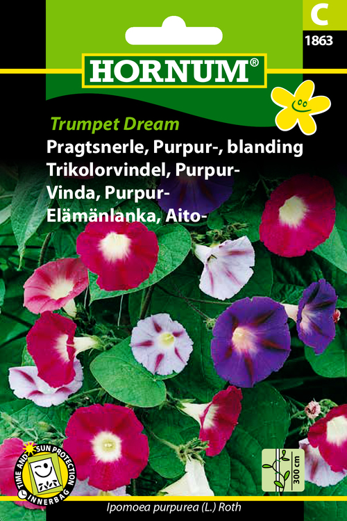 "Purpurvinda ""Trumpet Dream"""