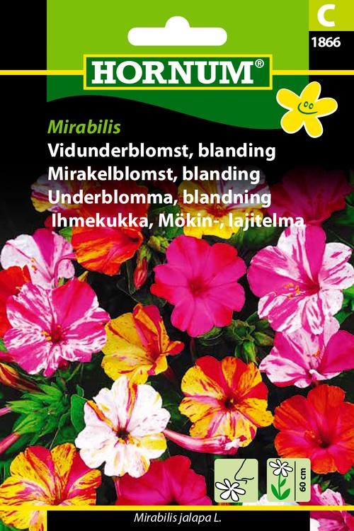 """Underblomma """"Mirabilis"""""""