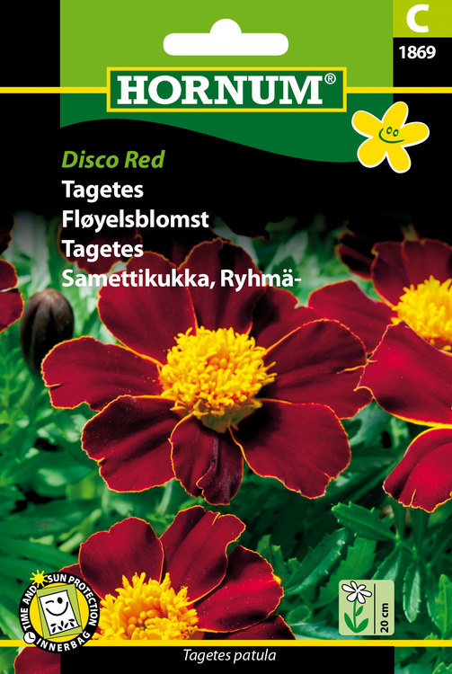 "Tagetes ""Disco Red"""
