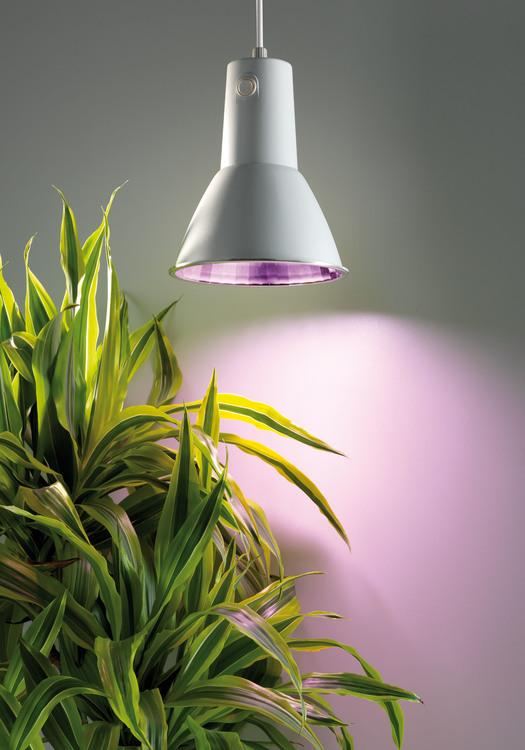 Växtlampa