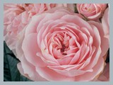 Pink™ HIT®