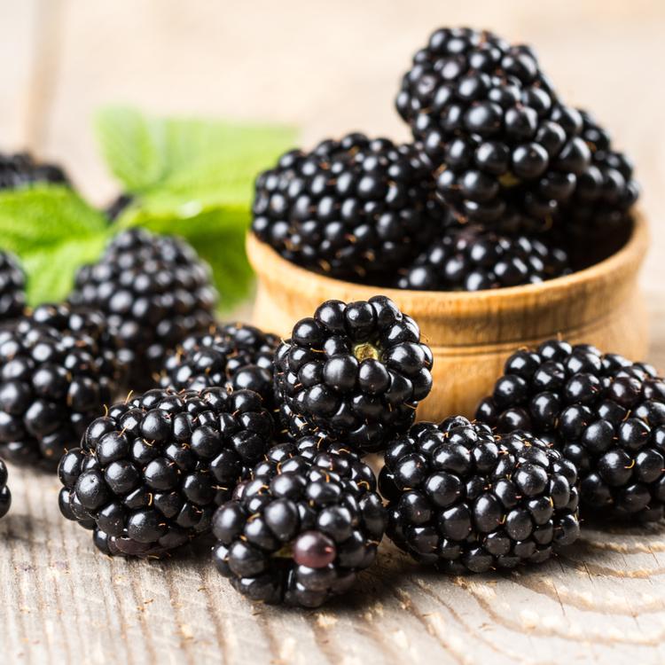 """Rubus """"Black Satin"""" - Björnbär"""
