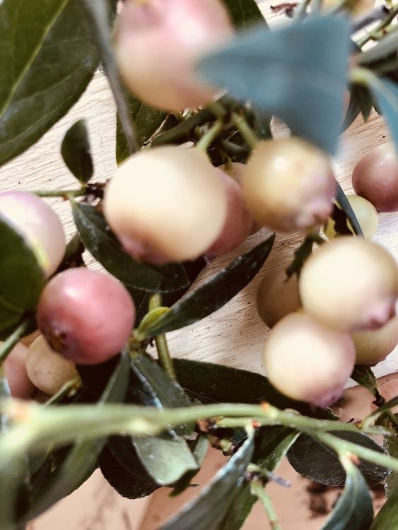 Pink Limonade  ( pink blåbär)