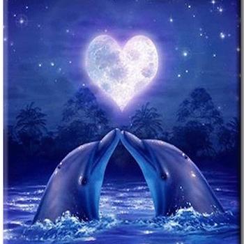Diamanttavla Dolphin Love 40x50