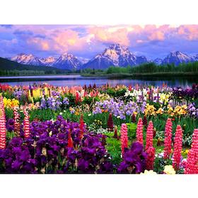 Diamanttavla Scenic Colorful Flowers 50x70