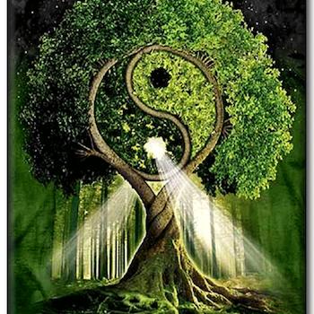 Diamanttavla Tai Chi Tree 60x90