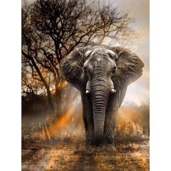 Diamanttavla (R) Elephant 50x70 - Leveranstid 1-3 Dagar