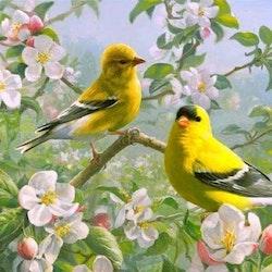 Diamanttavla (R) Birds In Cherrytree