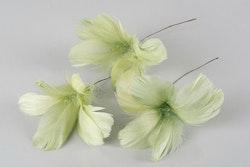 Fjäder Blom Lime 12-pack