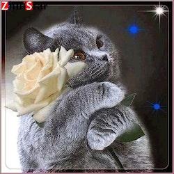 Diamanttavla Cat White Rose 50x50