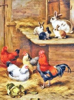 Diamanttavla Hens And Rabbits 40x50