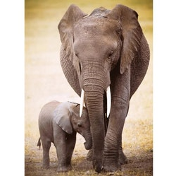 Diamanttavla Elephants Family Is All 40x50