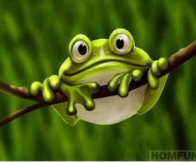 Diamanttavla Frog In Tree 20x30