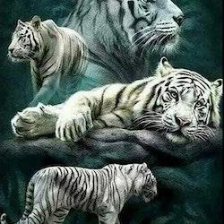 Diamanttavla White Tigers 50x70