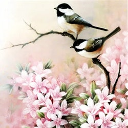 Diamanttavla (R) Birds And Flowers 50x50