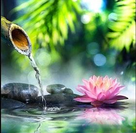 Diamanttavla Water Lotus 50x50