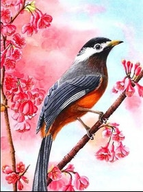 Diamanttavla Bird Pink Flower Tree 40x30